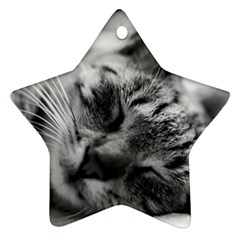 Adorable Animal Baby Cat Star Ornament (two Sides)