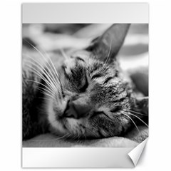 Adorable Animal Baby Cat Canvas 18  X 24