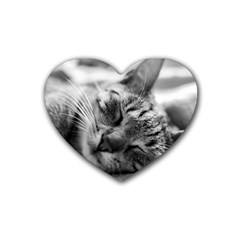 Adorable Animal Baby Cat Heart Coaster (4 Pack)