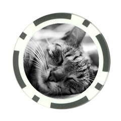 Adorable Animal Baby Cat Poker Chip Card Guard