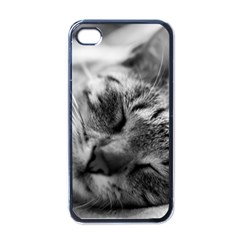Adorable Animal Baby Cat Apple Iphone 4 Case (black)