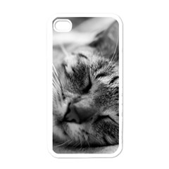 Adorable Animal Baby Cat Apple Iphone 4 Case (white)