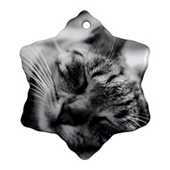 Adorable Animal Baby Cat Snowflake Ornament (two Sides)
