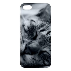 Adorable Animal Baby Cat Apple Iphone 5 Premium Hardshell Case