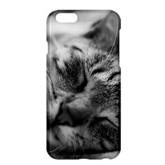 Adorable Animal Baby Cat Apple Iphone 6 Plus/6s Plus Hardshell Case