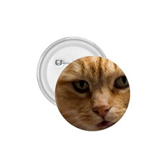 Animal Pet Cute Close Up View 1 75  Buttons