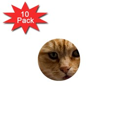 Animal Pet Cute Close Up View 1  Mini Buttons (10 Pack)