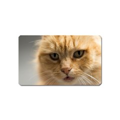 Animal Pet Cute Close Up View Magnet (name Card)