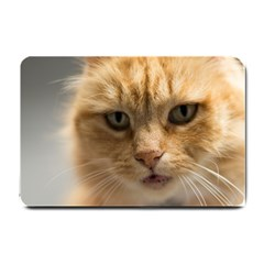 Animal Pet Cute Close Up View Small Doormat