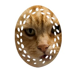 Animal Pet Cute Close Up View Ornament (oval Filigree)