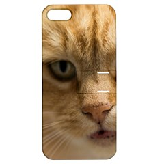 Animal Pet Cute Close Up View Apple Iphone 5 Hardshell Case With Stand
