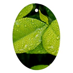 Leaf Green Foliage Green Leaves Ornament (oval) by Simbadda