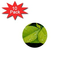 Leaf Green Foliage Green Leaves 1  Mini Buttons (10 Pack)
