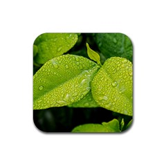 Leaf Green Foliage Green Leaves Rubber Coaster (square)