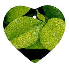 Leaf Green Foliage Green Leaves Heart Ornament (two Sides)