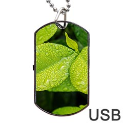 Leaf Green Foliage Green Leaves Dog Tag Usb Flash (two Sides) by Simbadda