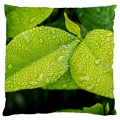 Leaf Green Foliage Green Leaves Large Cushion Case (two Sides) by Simbadda