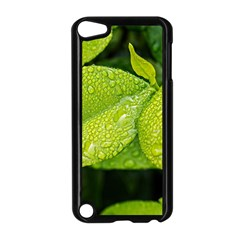 Leaf Green Foliage Green Leaves Apple Ipod Touch 5 Case (black) by Simbadda