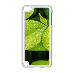 Leaf Green Foliage Green Leaves Apple Ipod Touch 5 Case (white) by Simbadda