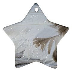Feather Brown Gray White Natural Photography Elegant Ornament (star)