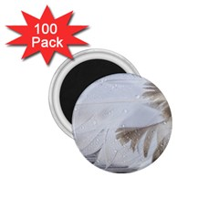 Feather Brown Gray White Natural Photography Elegant 1 75  Magnets (100 Pack)