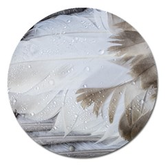 Feather Brown Gray White Natural Photography Elegant Magnet 5  (round)