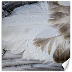 Feather Brown Gray White Natural Photography Elegant Canvas 20  X 20