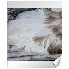 Feather Brown Gray White Natural Photography Elegant Canvas 11  X 14