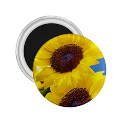 Sunflower Floral Yellow Blue Sky Flowers Photography 2 25  Magnets