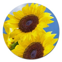 Sunflower Floral Yellow Blue Sky Flowers Photography Magnet 5  (round)