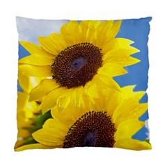 Sunflower Floral Yellow Blue Sky Flowers Photography Standard Cushion Case (two Sides)
