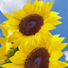 Sunflower Floral Yellow Blue Sky Flowers Photography Magic Photo Cubes