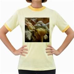 Seashells Women s Fitted Ringer T Shirts
