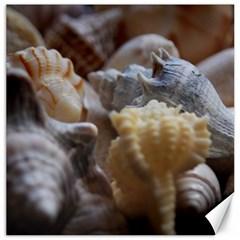 Seashells Canvas 16  X 16   by sherylchapmanphotography