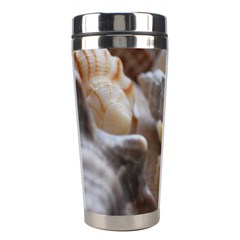 Seashells Stainless Steel Travel Tumblers