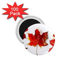 Innovative 1 75  Magnets (100 Pack)