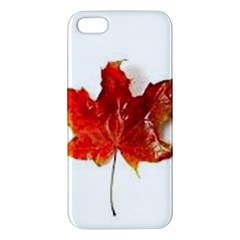 Innovative Apple Iphone 5 Premium Hardshell Case