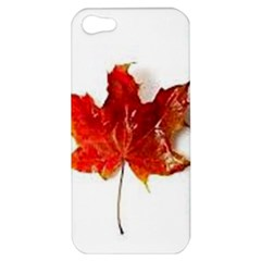 Innovative Apple Iphone 5 Hardshell Case by GlobidaDesigns