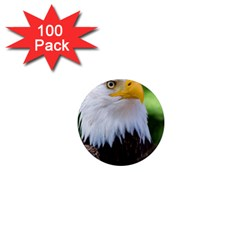 Bald Eagle 1  Mini Magnets (100 Pack)  by goodart