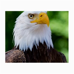 Bald Eagle Small Glasses Cloth