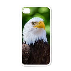 Bald Eagle Apple Iphone 4 Case (white)
