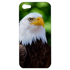 Bald Eagle Apple Iphone 5 Hardshell Case