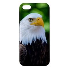 Bald Eagle Iphone 5s/ Se Premium Hardshell Case