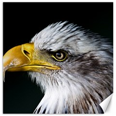 Bald Eagle Portrait  Canvas 16  X 16
