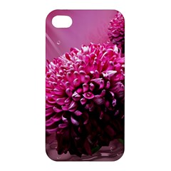 Majestic Flowers Apple Iphone 4/4s Hardshell Case