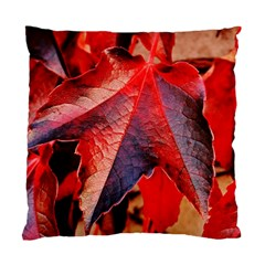 Wine Partner Wild Vine Leaves Plant Standard Cushion Case (one Side)