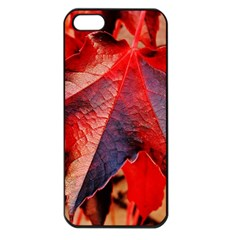 Wine Partner Wild Vine Leaves Plant Apple Iphone 5 Seamless Case (black) by Sapixe
