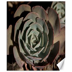 Succulent Green Pink Rosettes Canvas 8  X 10  by Sapixe