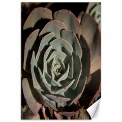 Succulent Green Pink Rosettes Canvas 12  X 18   by Sapixe