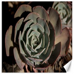 Succulent Green Pink Rosettes Canvas 16  X 16   by Sapixe
